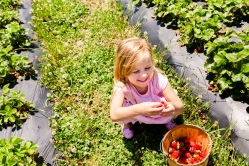 2016-Strawberry Picking with Family_11
